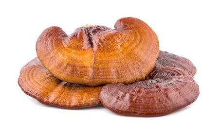 Dried Ganoderma Lucidum Mushroom isolated on white background.Ling Zhi Mushroom  写真素材