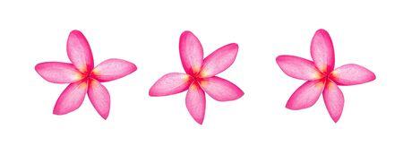 frangipani flowers isolated on white background 写真素材