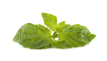 fresh basil isolated on white background