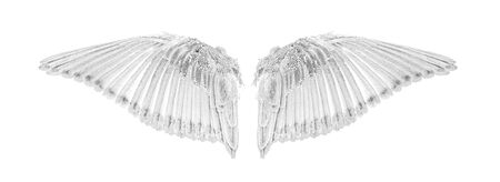 Angel wings an isolated on white background 写真素材