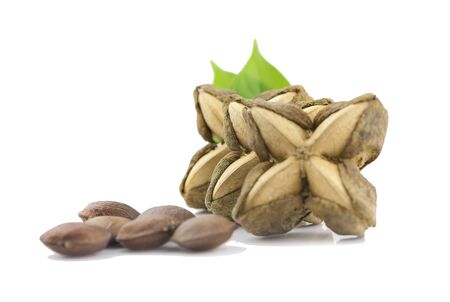 Nuts Incas , sacha inchi peanut seed an isolated on white background Stockfoto