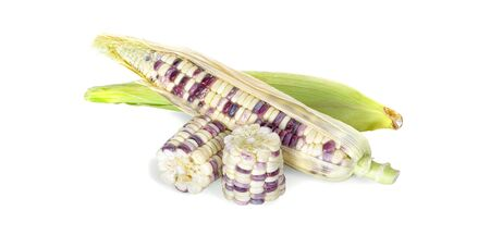 Corn an isolated on white background