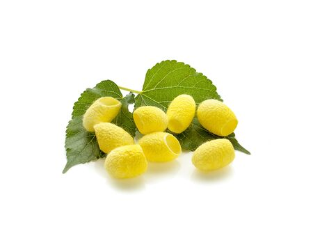 yellow thai silkworm cocoons pile an isolated on white background