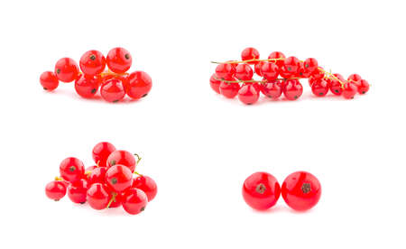 Red currant berries an isolated on white background