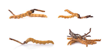 Ophiocordyceps sinensis (CHONG CAO, DONG CHONG XIA CAO) or mushroom cordyceps this is a herbs on white background Banco de Imagens