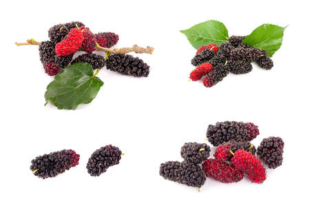 Mulberry with leaves isolated on white background Banco de Imagens