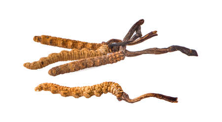 Ophiocordyceps sinensis (CHONG CAO, DONG CHONG XIA CAO) or mushroom cordyceps this is a herbs on white background.cilpping path Stock Photo