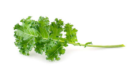 Single curly kale leaf isolated on white background Stok Fotoğraf