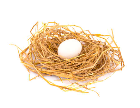 duck egg in nest on white background