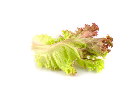 Red oak lettuce isolated on white background