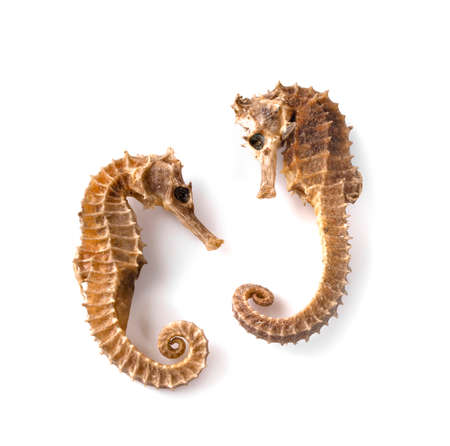Dried seahorse isolated on white background
