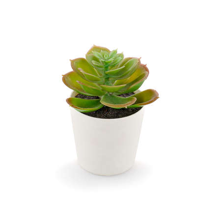 Succulent plants in pots on white background Stok Fotoğraf