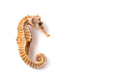 Dried seahorse isolated on  background. Stok Fotoğraf