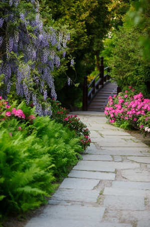 Stone-paved path leads to the bridge. Along the path ferns, wisteria, rhododendrons. All magnificently blossoms Stock Photo