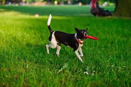 brawny: The dog