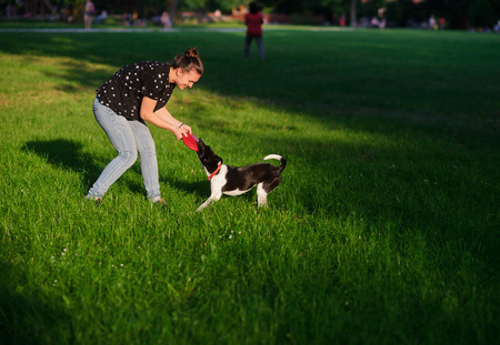 The young woman plays with a dog on a green lawn in park. She tries to pull out a disk of red color from a mouth of a dog. But the dog has seized him strong. She likes to play. Stock Photo