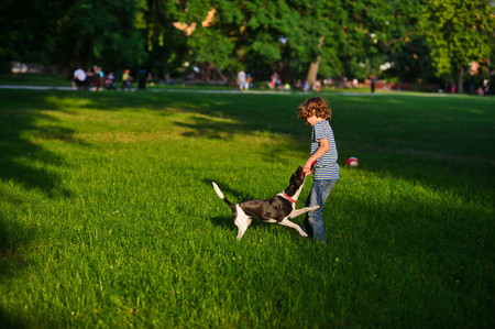 naughty boy: The naughty boy plays with doggy on a green glade in park.She tries to pull out a disk of red color from a mouth of a dog. But the dog has seized him strong. She likes to play.