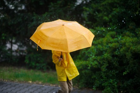 The childs head in a bright yellow raincoat is closed by a big umbrella. The face isnt visible. Around magnificent wet vegetation. Large drops of a rain fall.