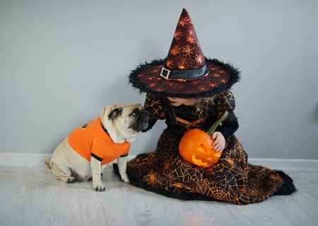 hallows: All Hallows Eve. Little girl in a suit of the evil sorcerer sits on a floor and irons an amusing pug. On a doggie have put on an orange sweater. The girl holds pumpkin - Halloween symbol. Stock Photo