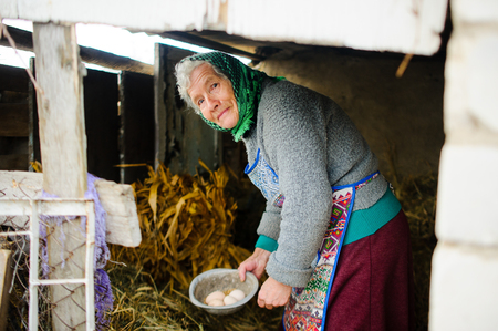 The elderly countrywoman gathers eggs in a hen house. Natural products. Subsidiary farm.