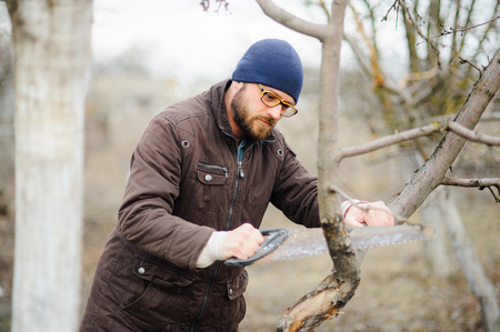 The young bearded man saws dry branches of fruit trees. Seasonal leaving is necessary for a garden. Stock Photo