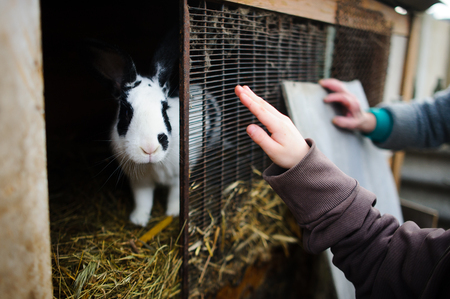 Big spotty rabbit in a cage. Someones hands touch a cage. Rural life. Subsidiary farm.