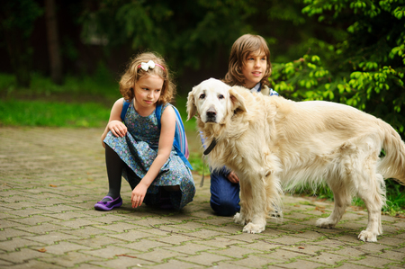 Little schoolchildren meet on the way to school a large dog. Good-natured retriever drew the childrens attention. Children squatted down next to cute dog. Stock Photo
