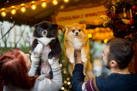 Christmas holidays. Young couple on the Christmas bazaar with pets. Two little spitz-dogs on hands at the owners.