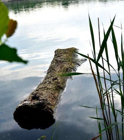 Old trunk in the pond
