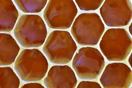 Bee`s slice full of honey as background. Honey macro in comb texture pattern background.