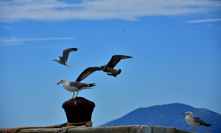 A group of seagulls at sea. Two of them sitting on the pier and the other two, young and adult, flying on the sky