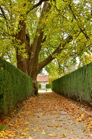 Footpath in park. It is covered with autumn leaves. On the end of footpath is a bird pigeon.