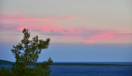 Beautiful pink sky at sunset on very windy day at see with blurred pine tree