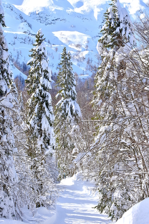 Winter scene on Vogel, Slovenia. Snowy landscape high in the mountains. With ski track surrounded by snowy spruce trees. Vertical photo.