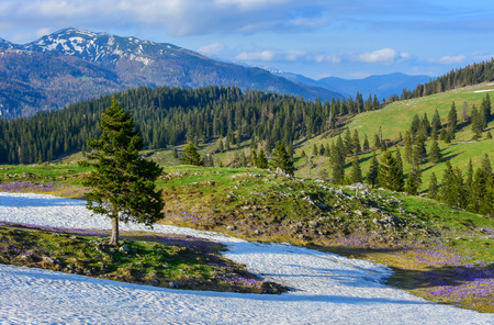 Beautiful landscape with beautiful wild flowers in spring time. With hills, snow, forest, sky,... Velika planina, Slovenia Stock Photo