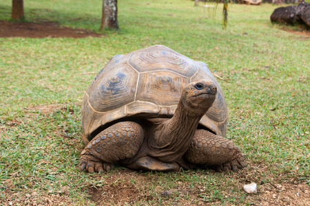 Aldabra Giant Tortoise Imagens