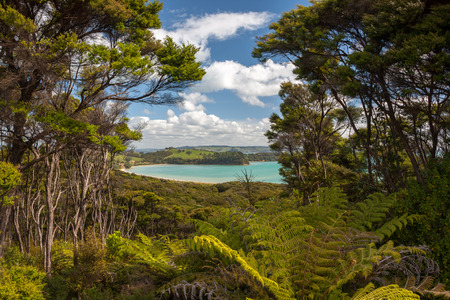 Blue Bay - Waiheke Island, New Zealand