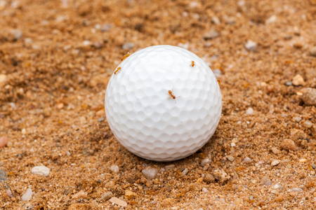 faulty: Golf Ball in Sand, Occupied by Ants