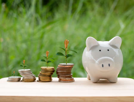 Piggy bank and money coin are placed on wooden table on natural background. With trees growing on a pile of money It represents the concept of financial growth. Business ideas and savings Stockfoto