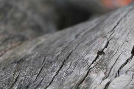 big cork: The texture of tree bark