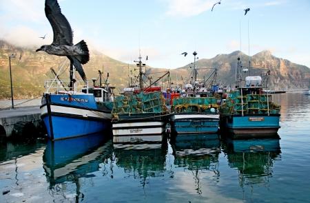 fishing boats at hout bay photo