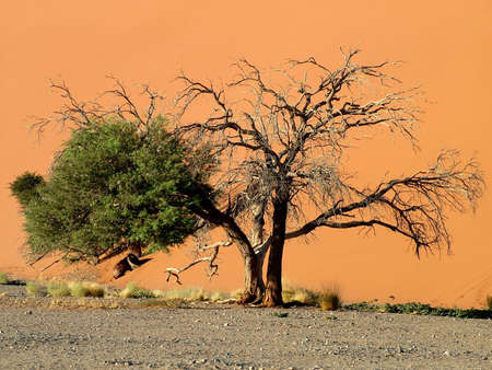 The Nambian Naukluft Desert Stock Photo - 945454