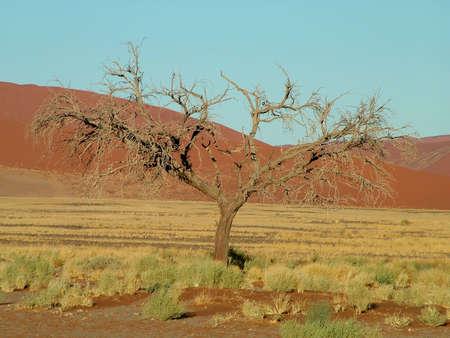 Namib Naukluft Desert Stock Photo - 945455