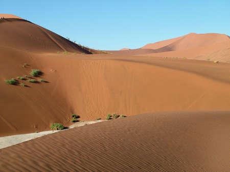 desert footprint: Dunes in the Desert