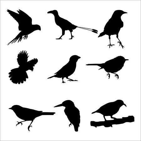 Here is 9 random birds differently posing vector format.