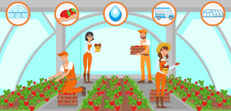 Harvesting Strawberries in Greenhouse. Men and Women Workers. Natural Resource. Growing Plants Concept. Watering and Irrigation System. Fruit Picking Work. Vector Flat Illustration.