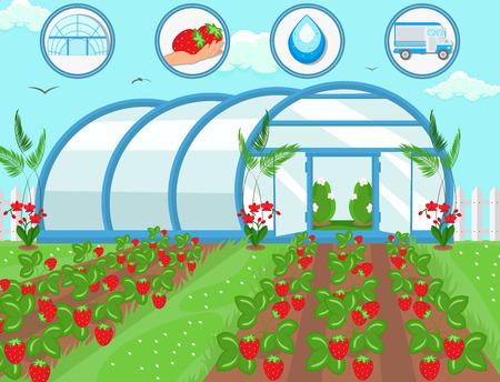 Fragole in serra. Concetto di raccolta. Risorsa naturale. Piante in crescita. Sistema di irrigazione e irrigazione. Consegna del raccolto. Lavoro di raccolta della frutta. Concetto di affari di fattoria. Illustrazione piana di vettore. Vettoriali