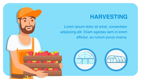 Berry Harvesting Web Banner Flat Vector Template. Farmer Cartoon Character Selling Organic Strawberry. Natural Ripe Fruits Crop in Wooden Container. Farming, Horticulture Industry Poster