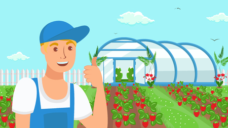 Farmer Growing Strawberries Vector Illustration. Berries and Fruits Summer Crop. Handyman Cartoon Character Showing Thumb Up Gesture. Horticulture. Seasonal Harvest Growing in Field, Garden