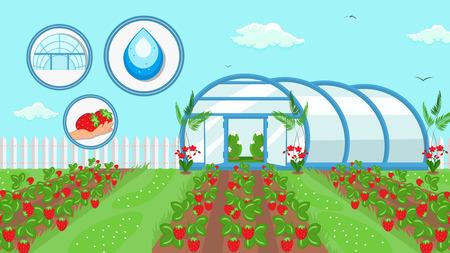 Berry teelt landbouw technologie illustratie. Rijpe Aardbeien, Fruit Oogst. Zomergewas groeit in veld. Landbouw, Tuinbouw Industrie. Bloemen, Struiken in Cartoon Broeikas
